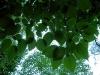 verde_su_verde.jpg